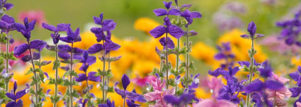 Artigo Dicas para Quem Toma Florais