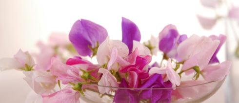 Florais para Harmonia do Lar_1